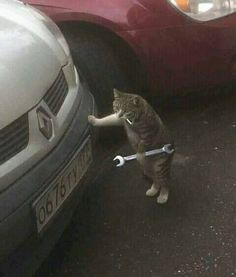 Kocheng Mechanical Engineering Don't want to miss the latest update? Let's direct fo … - Süße Katzen 2020 Baby Animals, Funny Animals, Cute Animals, Cute Kittens, Cats And Kittens, Cat Stands, Funny Animal Pictures, Funny Images, Animal Memes