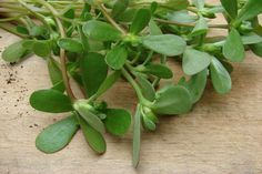 Add to Favorites By Habeeb Salloum, Canada Rather than saving purslane benefits for the salad bowl, most gardeners weed it out for the compost heap. Yet, people have been eating purslane as … Edible Succulents, Types Of Succulents, Cacti And Succulents, Planting Succulents, Succulent Gardening, Edible Flowers, Purslane Benefits, Portulaca Oleracea, Leafy Plants