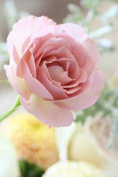 dream rose | Flickr - Photo Sharing!