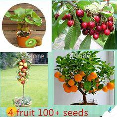 4 kind fruit  ,bonsai fruit  tree seeds ,vegetable and fruit seeds  total 100+ seeds -  http://mixre.com/4-kind-fruit-bonsai-fruit-tree-seeds-vegetable-and-fruit-seeds-total-100-seeds/  #Bonsai