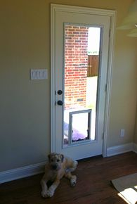 Full View Glass Insert With Pet Door Large Diy