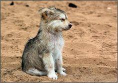 Wolf pup...OMG he is so cute
