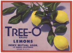 Tree-O brand lemons - La Habra, CA