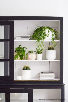 Fresh house plants in store - Styling/Photography: Indie Home Collective