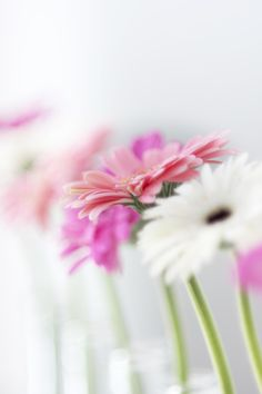 pretty floral photography