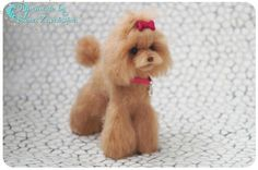 Poodle/ Red Poodle/ Asian grooming/ Miniature dog/ 1:6 scale