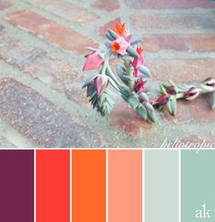 a summer-succulent-inspired color palette // purple, strawberry, tangerine, icy blue, soft blue-green