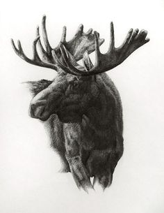 Moose, graphite on paper by Heather Theurer Wildlife Paintings, Seascape Paintings, Wildlife Art, Moose Tattoo, Lion Tattoo, Animal Drawings, Art Drawings, Moose Pictures, Hunting Tattoos