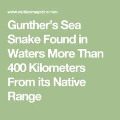 Gunther's Sea Snake Found in Waters More Than 400 Kilometers From its Native Range