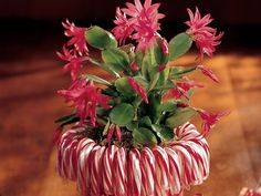Candy Cane Planter. Would make a great centerpiece.