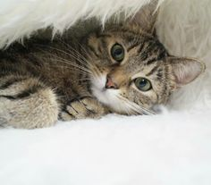 My little helper. 🐺🐈❤ #animals #animal #pet #cat #cats #photooftheday #cute #instagood #animales #love #nature #animallovers #follow #f4f #petstagram#cat #cats #catsagram #catstagram #instagood #kitten #pet #pets #animal #animals #petstagram #petsagram #photooftheday #catsofinstagram #ilovemycat #instagramcats #catoftheday #lovecats #lovekittens #adorable #catlover #instacat