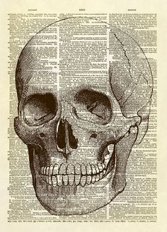 """This print features a medical illustration of a human skull from the book """"Our bodies and How We Live"""" published in 1904. He's perfect for a doctor's office, a medical student, or Halloween decor! Thi"""