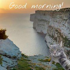 Wishing everyone a great week!  #cats #candycat #cat