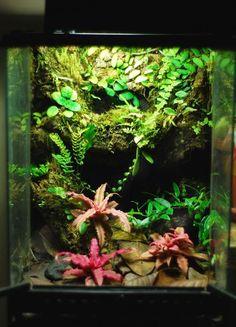 Your Source for Dart Frog and Vivarium information. Crested Gecko Vivarium, Crested Gecko Habitat, Crested Gecko Care, Terrariums Gecko, Tree Frog Terrarium, Reptile Terrarium, Reptile Habitat, Reptile Room, Geckos