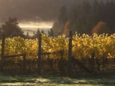 Ruby Vineyard and Winery