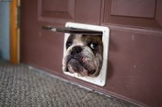 Anybody home? Harry has got his head stuck in a cat door... He looked just like this. LOL