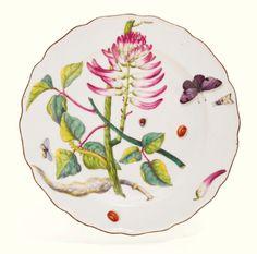 A Chelsea `Hans Sloane' botanical plate, cirrca 1755 | lot | Sotheby's