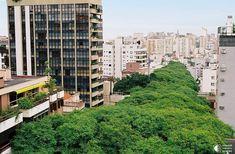 Зеленая улица в Бразилии - Путешествуем вместе