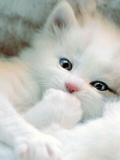 Sweet baby kitten