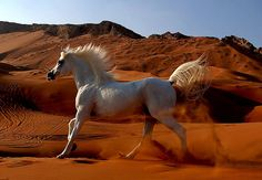 """I dream of rain, I dream of gardens in the desert sand! I dream of love as time runs through my hand! These dreams are tied to a horse that will never tire!"" #arabian"
