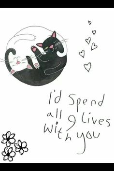 webcam - The World`s Most Visited Video Chat Crazy Cat Lady, Crazy Cats, Ying Yang, Cat Quotes, Here Kitty Kitty, Pretty Words, I Love Cats, Cat Art, Cats And Kittens