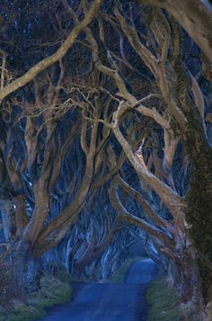 "Wow - stunning dark beauty - The Dark Hedges - N. Ireland.  Michele Erdvig says: ""The timeless aura is evocative of a Tolkienesque landscape."" Indeed."