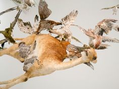 mathaf-arab-museum-of-modern-art-cai-guo-qiang-saraab-flying-together-life-like-falcons-with-camel.jpg (1024×768)
