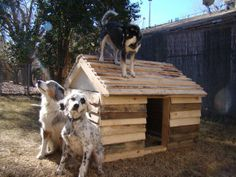 Recycle and Re-purpose Pallets - Pallet Dog House - Pioneer Keg Theresa, WI is located just blocks from Thunder Pallet Mfg. https://www.facebook.com/PioneerKeg