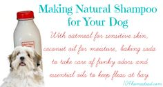 With oatmeal for sensitive skin, coconut oil for moisture, baking soda for funky odors, and essential oils to keep fleas at bay, you'll love this DIY dog shampoo. Flea Shampoo For Cats, Homemade Dog Shampoo, Diy Shampoo, Coconut Oil For Dogs, Coconut Oil For Skin, Smelly Dog, Natural Dog Shampoo, Baking Soda Shampoo, Can Dogs Eat
