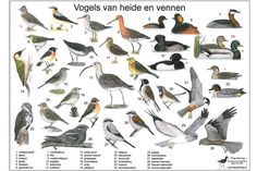 Natuur: zoekkaart vogels van heide en vennen