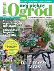 Marchewka z własnej grządki - jak uprawiać marchewkę? - Mój Piękny Ogród - Ogrody ozdobne, Rośliny, Kwiaty Begonia, Plants, Plant, Planets