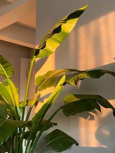 plant in golden hour