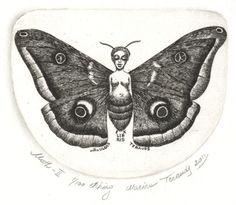 Marina Terauds--Owl Moth