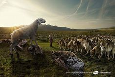 Sheeps health has nothing to fear l 25 Amazing Photo Illustrations