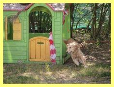 Speeltuin voor honden