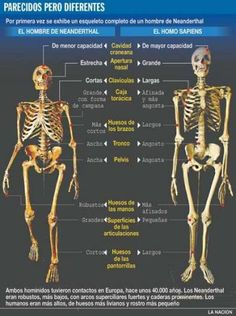 Los neandertales eran más bajos que nosotros, pero tenían una musculatura extremadamente fuerte. Sus esqueletos eran masivos, y tienen prominentes marcas musculares. Su anatomía en general está hecha para el territorio no muy agradable en el que vivían. Incluso los niños eran más musculosos que los niños actuales. La característica facial que más llama la atención es su nariz, que es grande y bulbosa.