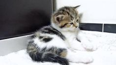 ~ KittensFell Asleep After Fight. Lol See this cat in action here http://pewpaw.com/video-peek-a-boo/ …