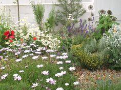 coastal garden uk - Google Search