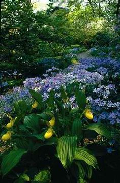 Shade garden: Spring is the time shade beds can really shine, bridging the gap between bulbs and summer blooms.