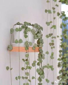 House Flowers 93685 8 indoor plants to hang in your living room Succulents Garden, Garden Plants, Planting Flowers, Potted Plants, Indoor Plants, Indoor Outdoor, Outdoor Decor, Pot Jardin, Decoration Plante