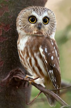 OK owls are just seriously cute birds!!!