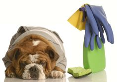 *Sping cleaning tips for homes with pets