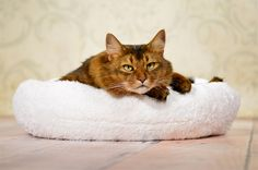Katze: Schlafplätze - CLOUD 9 – das himmlische Bettchen - ein Designerstück von Julinka-pets bei DaWanda