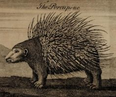The Porcupine, from J. Poundly & M. Andrew's The Wonders of Nature & Art. Engraving by Benjamin Cole, 1768.