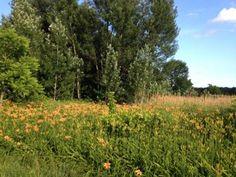 #Flowers in #Pennsylvania  -byd1schrom #biking
