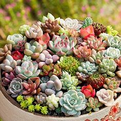 29 Ornamental Plants For Home Decoration Garden Seeds, Planting Seeds, Planting Succulents, Cactus Seeds, Succulent Seeds, Succulent Plants, Green Plants, Cactus Plants, Cacti