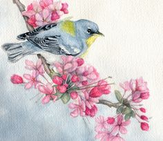 "watercolor painting of birds | Original watercolor bird painting northern parula warbler 7"" x 8"""