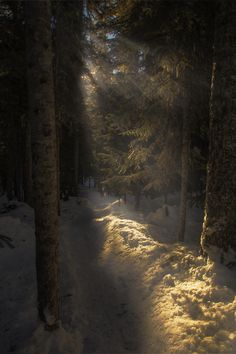 Landscape And Nature Beautiful Winter Pictures, Nature Pictures, Douglas Adams, Summer Goddess, Winter Schnee, Green Knight, Forest Light, Light Film, Winter Rose