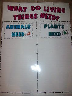 Terhune's First Grade Site!: Anchor Charts You are in the right place about Holzbearbeitung reg First Grade Science, Primary Science, First Grade Teachers, Kindergarten Science, Elementary Science, Science Classroom, Teaching Science, Science Education, Science Activities