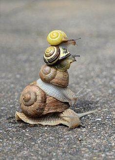 Snail Stack